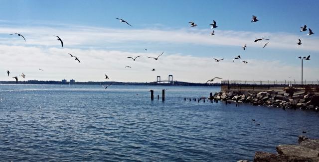 Gulls, City Island, Bronx. Photo: Lycurgo Vidalakis