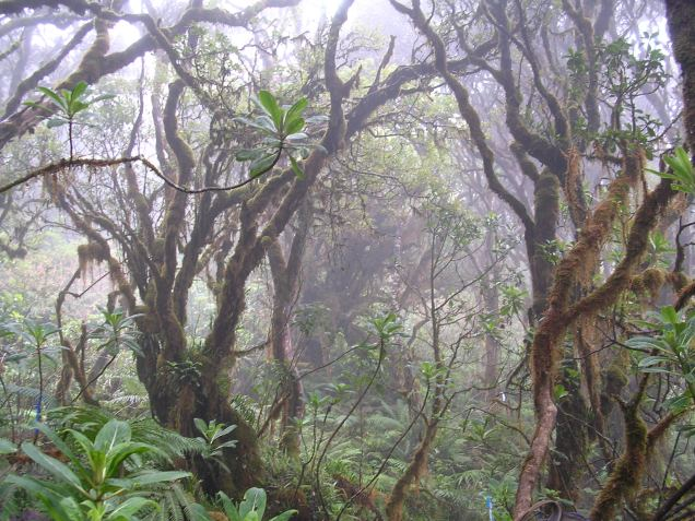 The cloud forest interior.