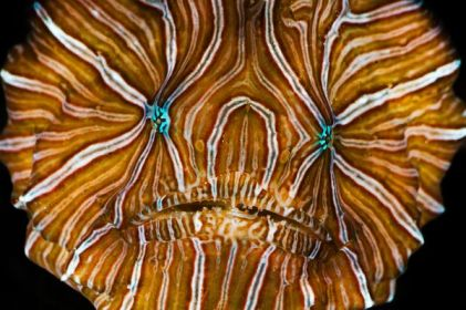 top-10-new-species-2009-psychedelic-frogfish_20928_600x4501