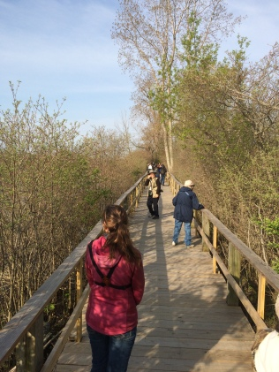 Birding along the boardwalk.