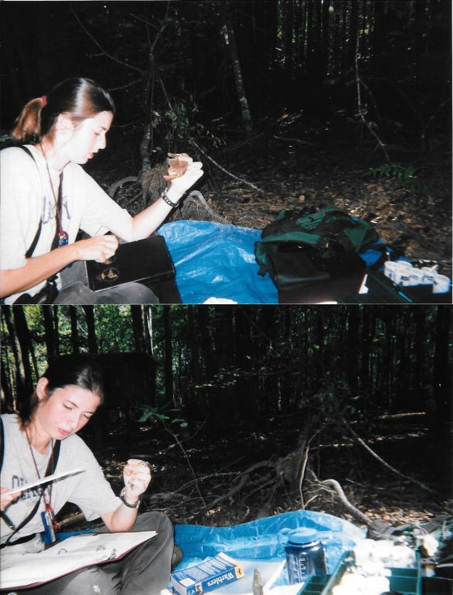 The author banding songbirds in Alabama.