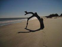 cabretta-beach-sapelo-island