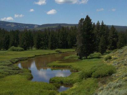 Near Huckleberry Hot Springs...Yellowstone/Tetons