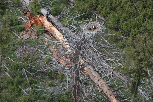 6mile_eagle_nest_doug_ (6).jpg